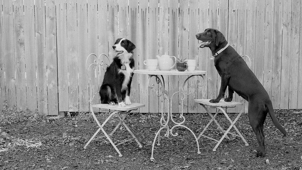 Dog tea